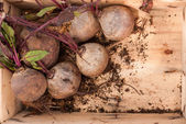 Beets in a box — Stockfoto