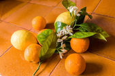 Orange and lemon — Stock Photo