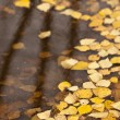 Puddle — Stock Photo #10982760