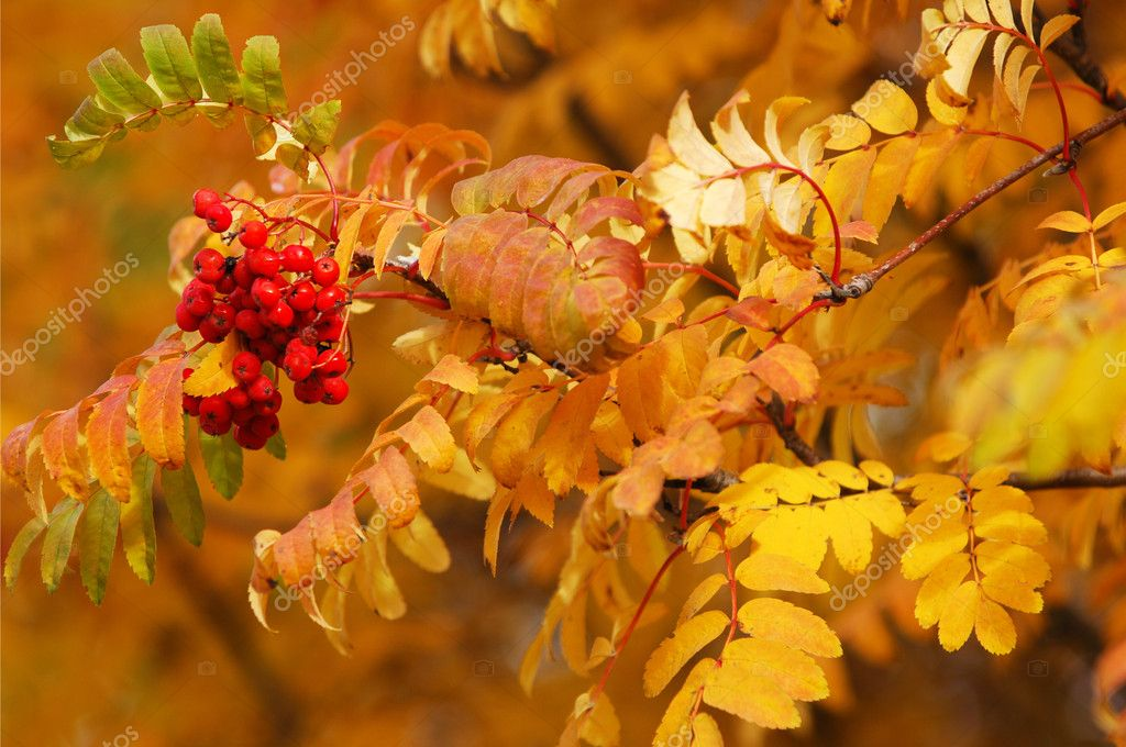 Alcoholic beverages, deciduous trees, — Stock Photo #10996435