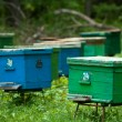 Agriculture, apiary, apiculture, bee, bee-garden, beekeeping, beeswax, ecosystem, farming, hive — Stock Photo #11002451