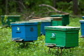 Agriculture, apiary, apiculture, bee, bee-garden, beekeeping, beeswax, ecosystem, farming, hive — Stock Photo