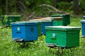 Hive — Stock Photo