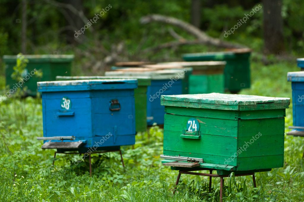 Agriculture, apiary, apiculture, bee, bee-garden, beekeeping, beeswax,  ecosystem, farming, hive  Foto de Stock   #11002451