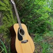 Acoustic guitar leaning against a moss covered tree — Stock Photo #10999909