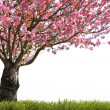 Glorious spring - Stock Photo
