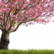 Stock Photo: Glorious spring