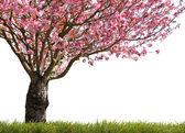 Glorious spring — Stock Photo