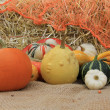 Pumpkins — Stock Photo #11000171