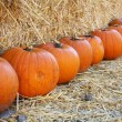 pumpkins — Stock Photo #11105218