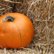 Pumpkin — Stock Photo #11105229
