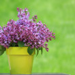 Bucket of lilacs — Stock Photo