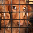 Dog in a cage. - Stock Photo