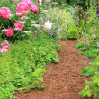 Garden path — Stock Photo #11105368