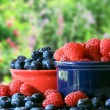 Summer berries — Stock Photo #11105370