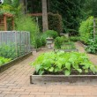 Vegetable garden — Foto de stock #11105382