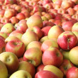 Organic apples - Stock Photo