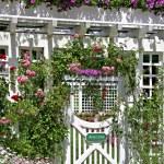 Rose garden — Stock Photo