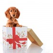 Christmas puppy present — Stock Photo #11105970