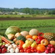 Farmer's crop — Stockfoto