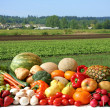 Farmer's crop — Stock Photo #11106012