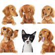 Cats rule! — Stock Photo #11106463