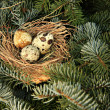 Bird nest - Stock Photo