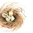 Bird nest — Stock Photo #11106735