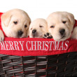 Royalty-Free Stock Photo: Christmas puppies