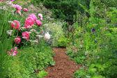 English cottage garden — Stock Photo