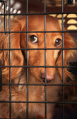 Dog in a cage. — Stock Photo