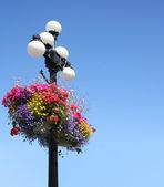 Summer flower baskets — Stock Photo