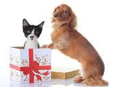 Dog and Christmas present. — Stock Photo