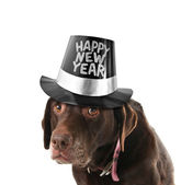 Happy new year dog — Stock Photo