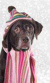 Winter dog — Stock Photo