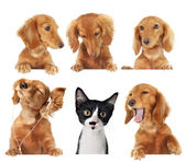 Cats rule! — Stock Photo