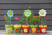 Pretty potted flowers — Stock Photo
