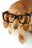 Smart dog — Stock Photo