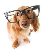 Smart puppy — Stock Photo