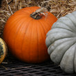 pumpkins — Stock Photo #11284983