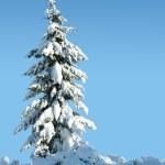Winter solitude — Stock Photo #11286065