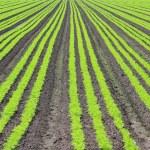Crop field — Stock Photo #11286189