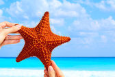 Star fish — Stock Photo