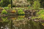 Duck pond — Stock Photo