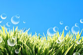 Burbujas de verano — Foto de Stock
