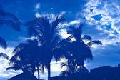 Tropischer morgen — Stockfoto