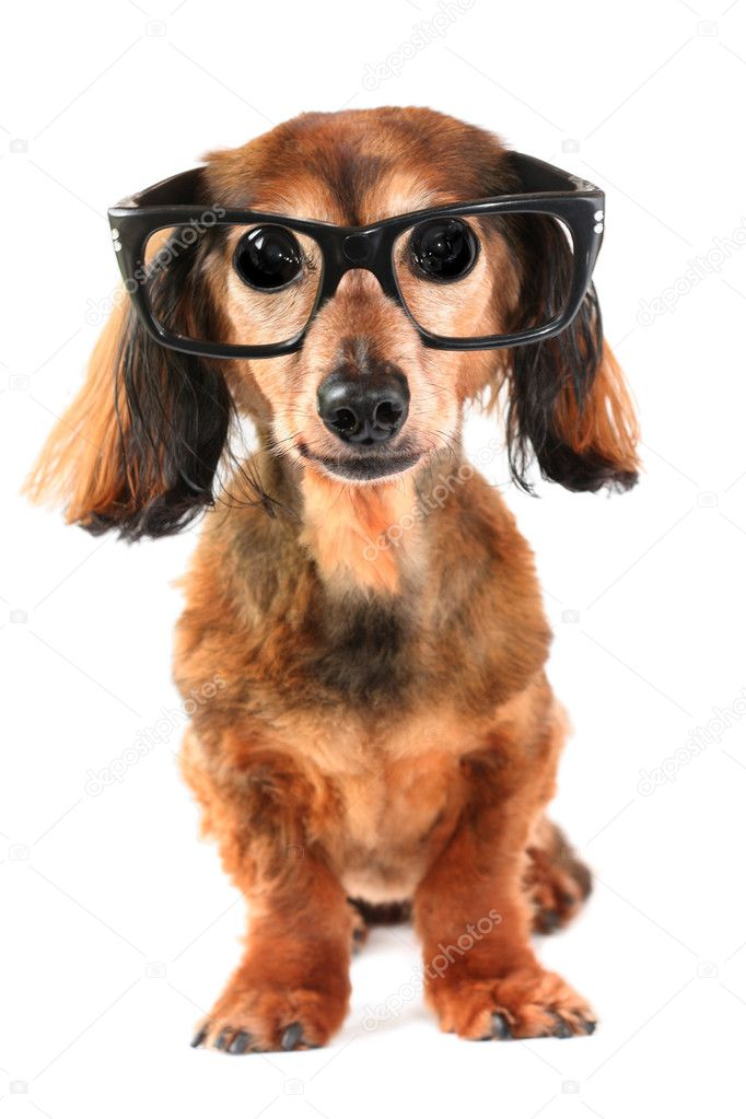 Goofy looking dog with big eyes. — Stockfoto #11287172