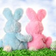 Easter bunny pair looking out at the sky — Stock Photo #11340353