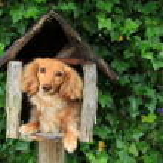Mailbox puppy — Stock Photo #11340434