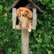 Mailbox puppy — Stock Photo #11340440